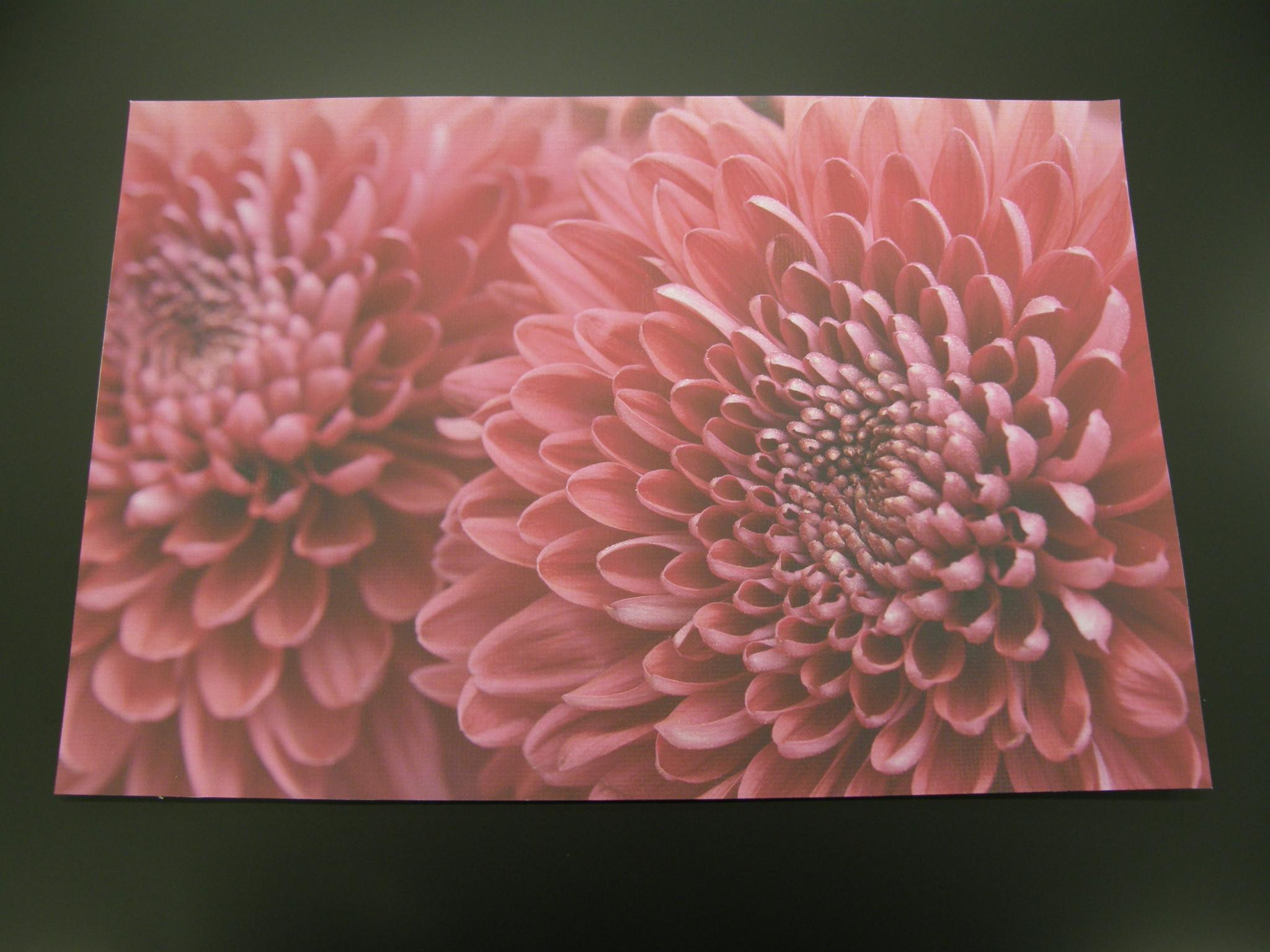 「ハルシックイ(HALSHIKKUI)」漆喰コーティングの高機能粘着シート